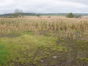 Arable land, east of Clynderwen
