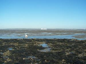 Mudflats at Low Tide off Allhallows