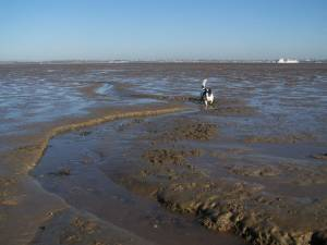 Mudflats of Allhallows at Low Tide
