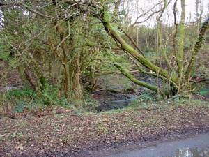 Brook near Cwm-coy, Blaenpennal