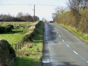 Hedge near Longhorsley
