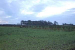 Copthorne Wood