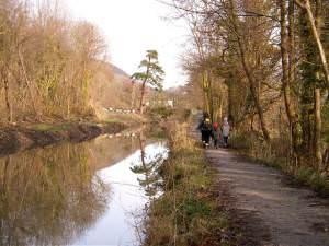 Pine tree and bridge to Ynys-Arwed Farm