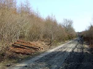 Forestry road near Llangybi, Ceredigion