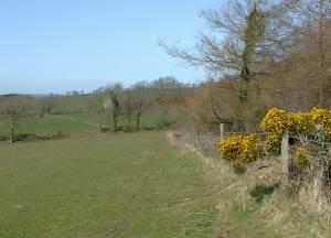 Pasture north of Llangybi, Ceredigion