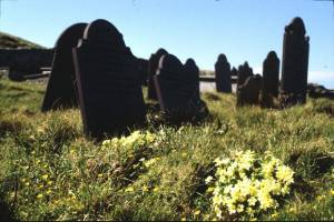Graveyard and Primroses.