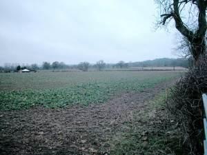 Batsford farmland