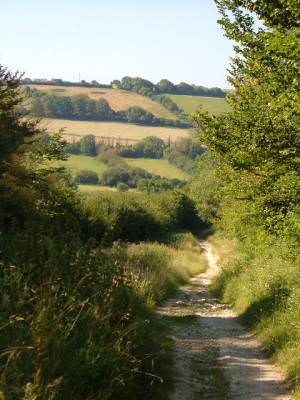 Bridleway near Osmington