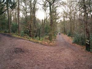 Junction of tracks, Lickey Hills Country Park