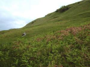 Hillside near Tomocrocher