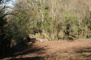 Muddy Horse Field