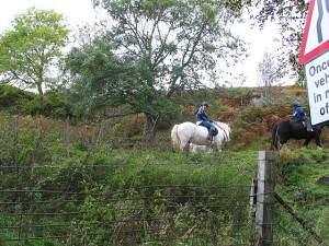 Horses above Milton Morenish