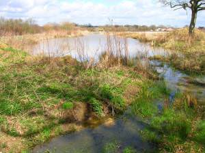 Henfield and District Anglers Fishing Ponds