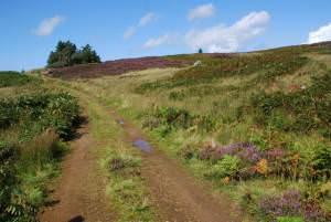 Moorland Track, West Kintyre