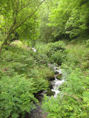 Stream through Bonhill Wood