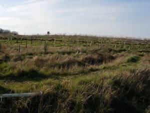 New Woodland