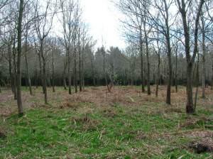 Capite Wood