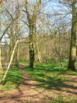 Grinders Wood