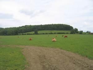 Shuckburgh Hills