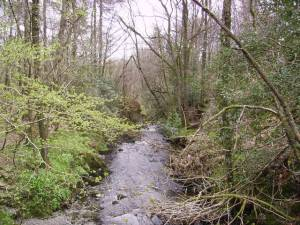 Grizedale Beck