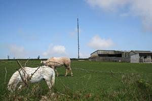 Horses, Farm Buildings and a Telecommunications Mast.