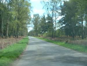 Road on Sandringham estate.