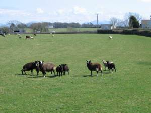 Pasture at Bodrwyn