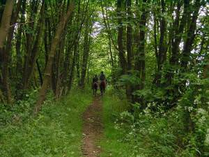 Bridleway from Coldblow to Friningham