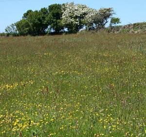 Meadow near Two Burrows
