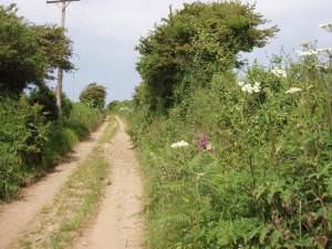 Lane near Trenowin