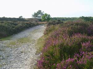 Footpath on Dunwich Heath