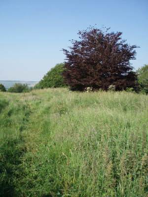 The top of Stantonbury Hill