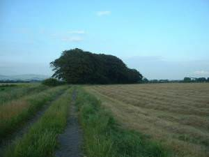 Band Lane, near Tarnacre Hall Farm