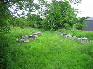 Beehives, Aberbothrie