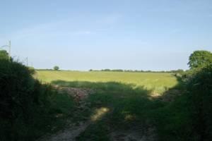 Field, Bulstone