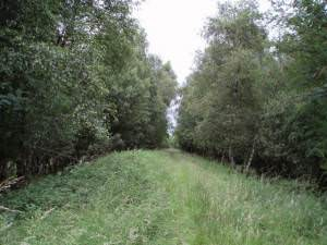Disused railway line near Easterhill