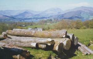 log pile near High Wray