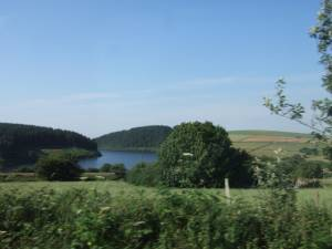 Rosebush reservoir on a summer day