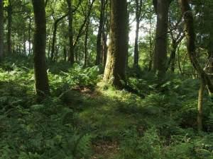 Earthworks in Knockinhaglish Wood