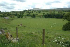 Football Pitch for Sheep