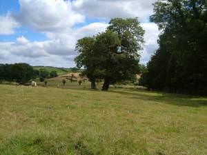 Field near Fallapit House