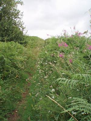Pathway to Knowle Hill
