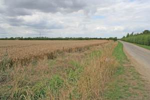 Cliff Lane near Marston, Lincolnshire