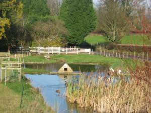Duckpond with duckhouse at Stowey Manor