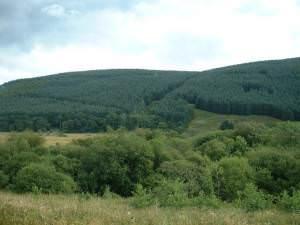 Ettrickside Forest