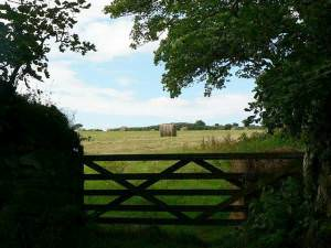 Field gate, Godolphin Estate