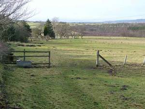 Field at Todburn West