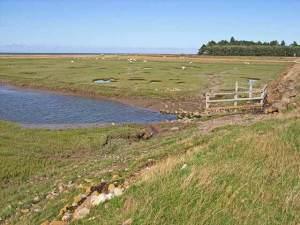 Grazing marshes west of Llanfairfechan