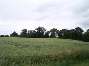 Chapelhill Rough, Clevelode