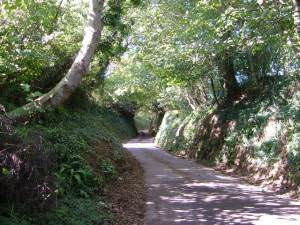 Sunken lane, Lower Sigdon